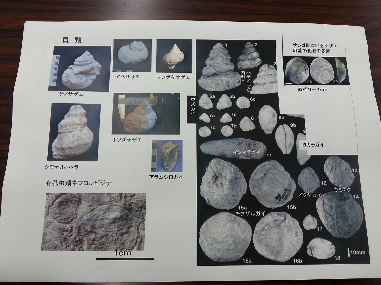 松崎の化石たち