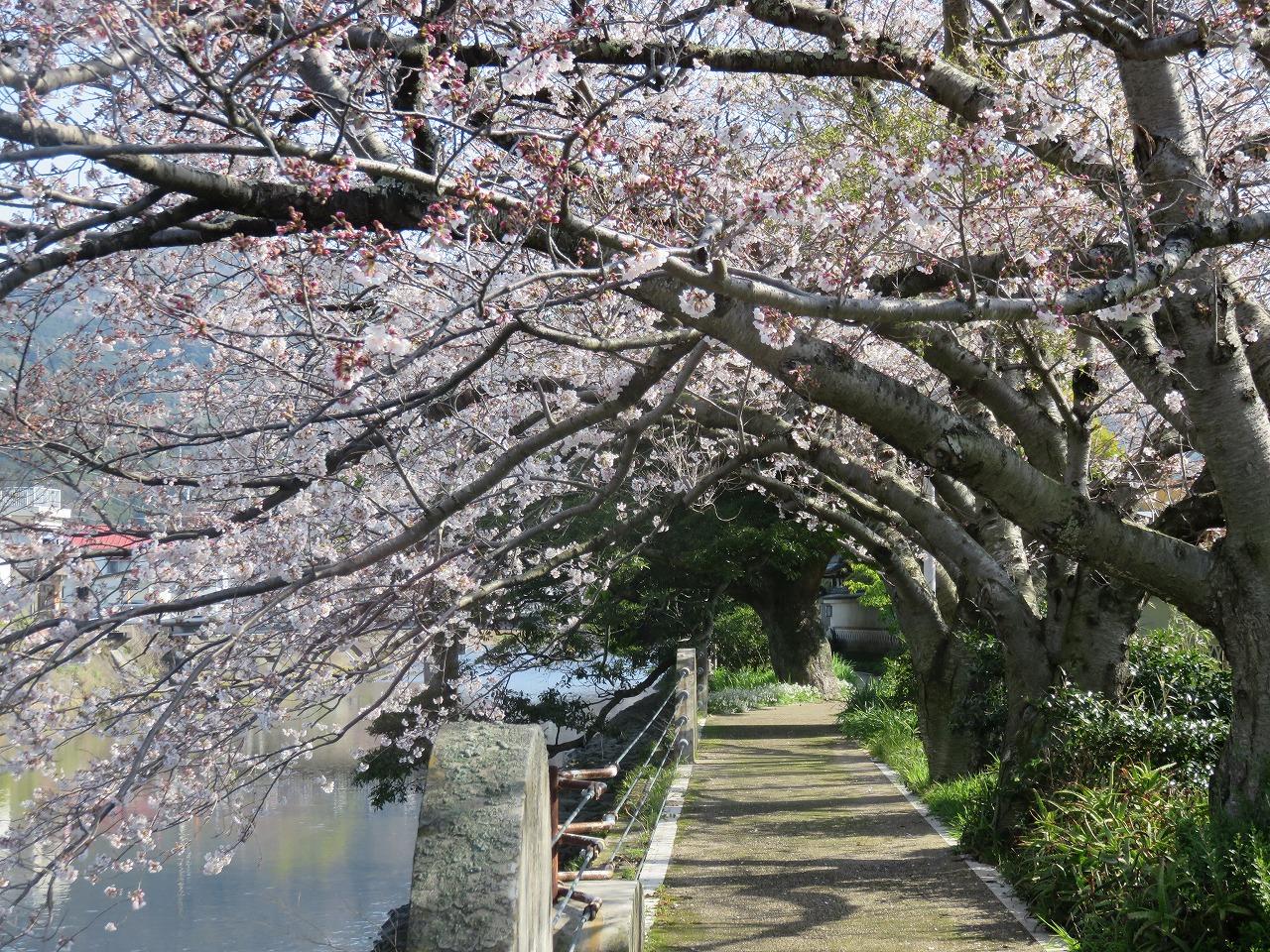 春の遊歩道