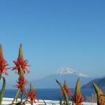 アロエと富士山