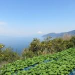 おかわさびと富士山