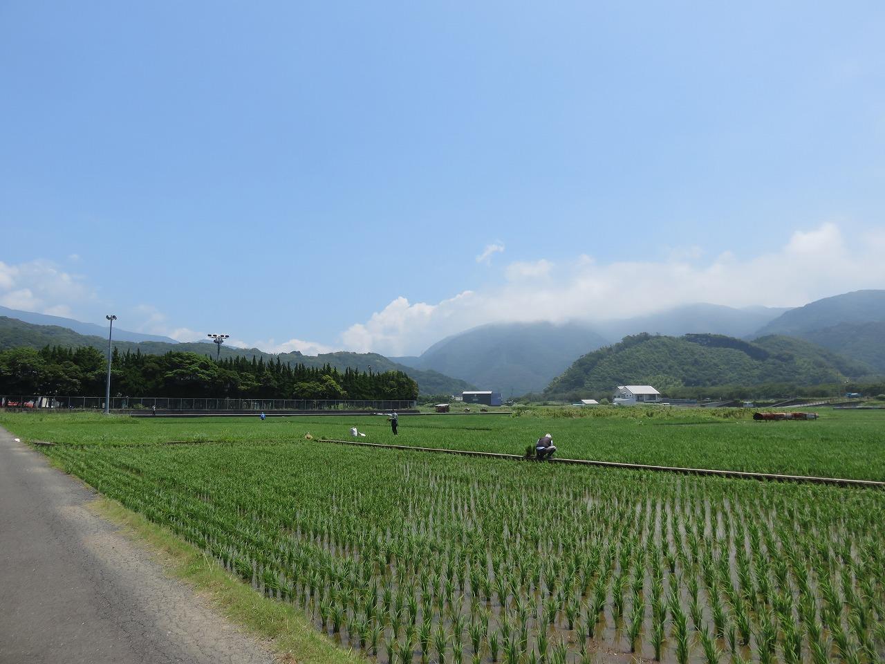 松崎の水田