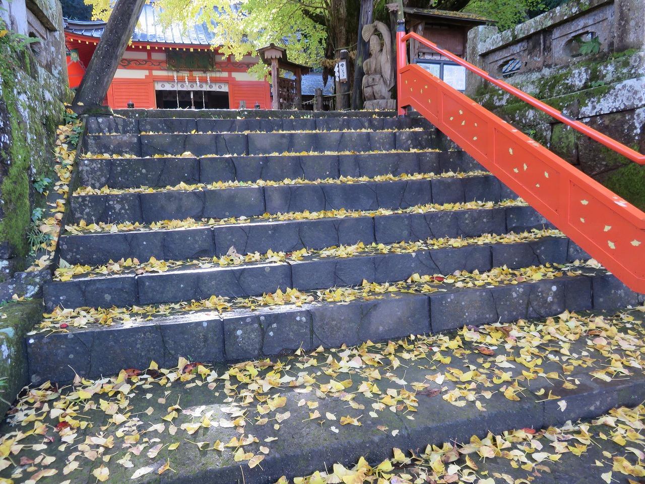 葉のじゅうたん