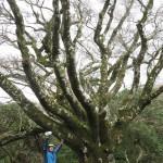目印のブナの樹