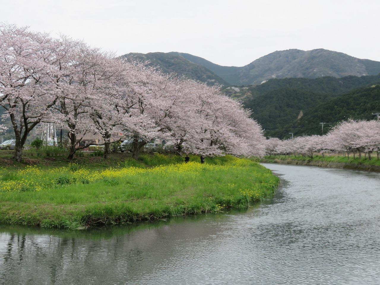 お花畑の川向こう