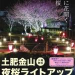 土肥金山 夜桜