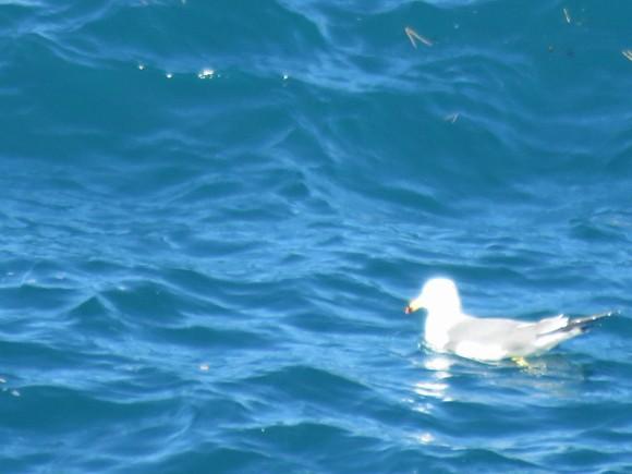 西伊豆の海2月