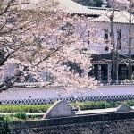 sakurashinshima